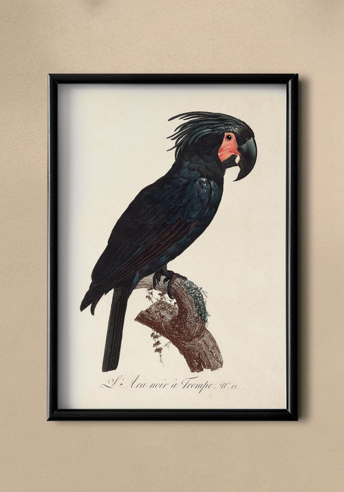 Black Macaw Vintage Animal Print
