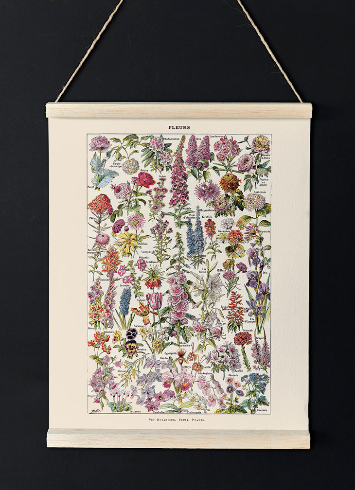 Fleur, the classic Vintage Flowers Chart by Adolphe Millot - Kuriosis Vintage Prints