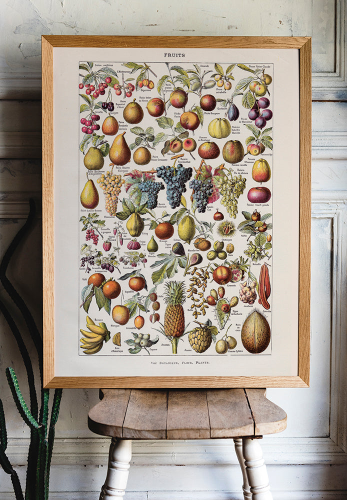Antique Fruits Chart by Adolphe Millot - Kuriosis Vintage Prints