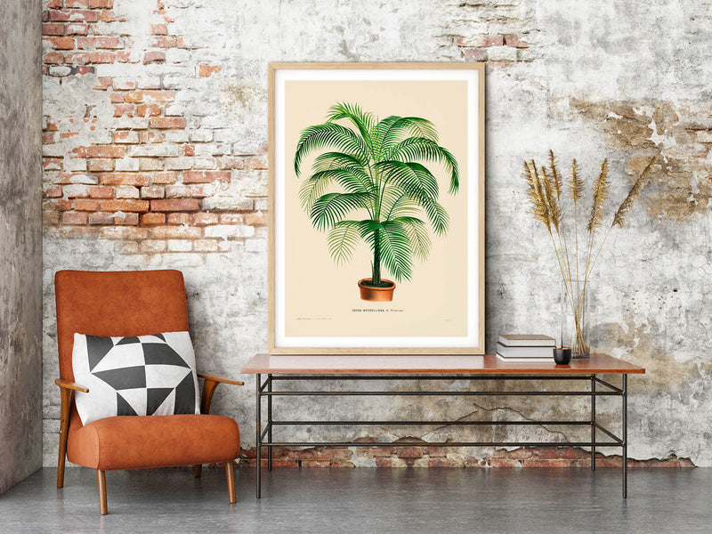 Coco Weddelliana Palm Tree Poster