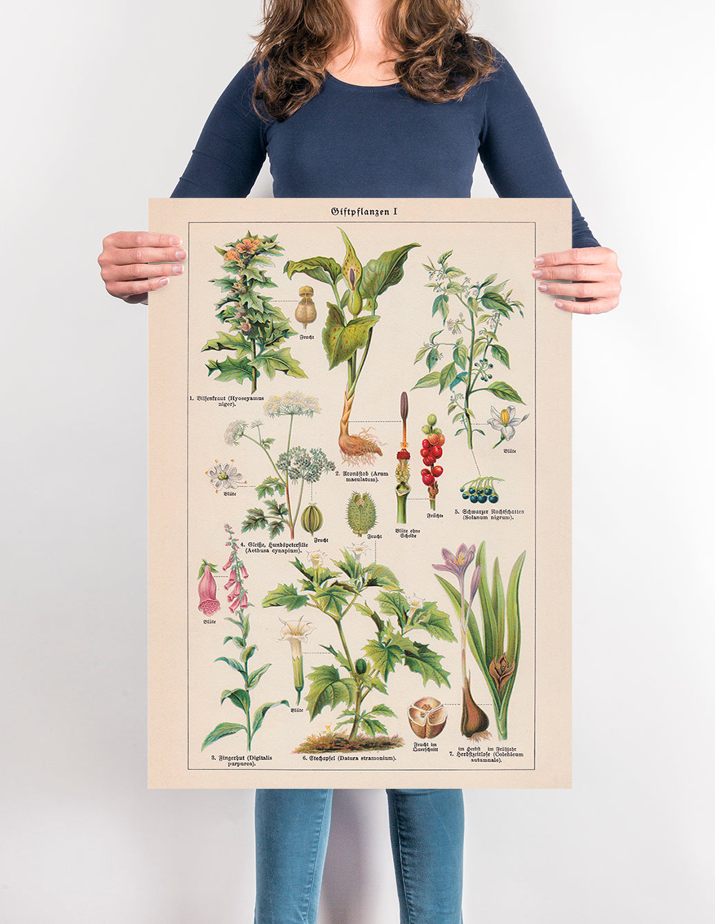 Poisonous and Toxic Plants I (Giftpflanze) - Kuriosis Vintage Prints
