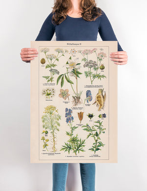 Poisonous and Toxic Plants II (Giftpflanze) - Kuriosis Vintage Prints