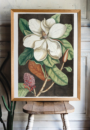 Laurel Tree and Magnolia Altissima Poster - Kuriosis Vintage Prints