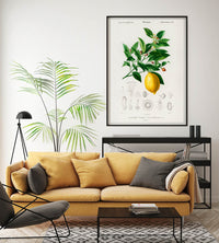 Lime Flower &  Lemon Fruit Vintage Poster