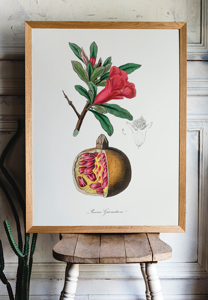 Pomengrate Kitchen Poster - Kuriosis Vintage Prints