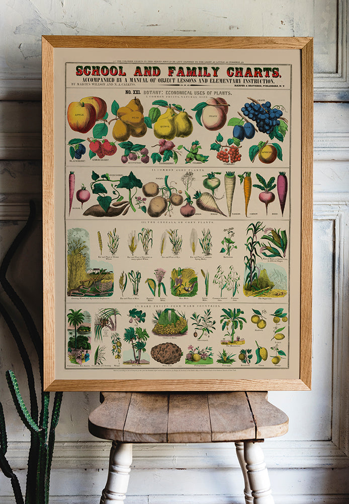 Botanical School and Family Chart - Kuriosis Vintage Prints