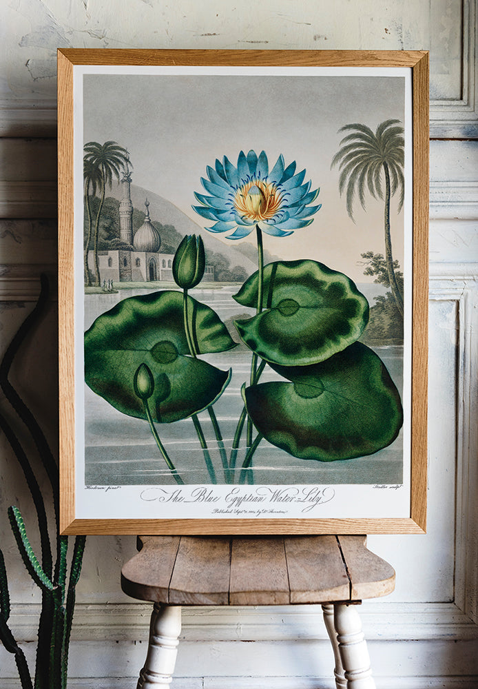 Flower Print Egyptian Water Lilly Temple of Flora - Kuriosis Vintage Prints