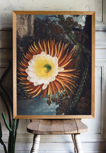 Flower Print Night-Blowing Cereus Temple of Flora - Kuriosis Vintage Prints