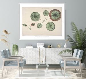 Victoria Regia Flower Grown Botanical Poster