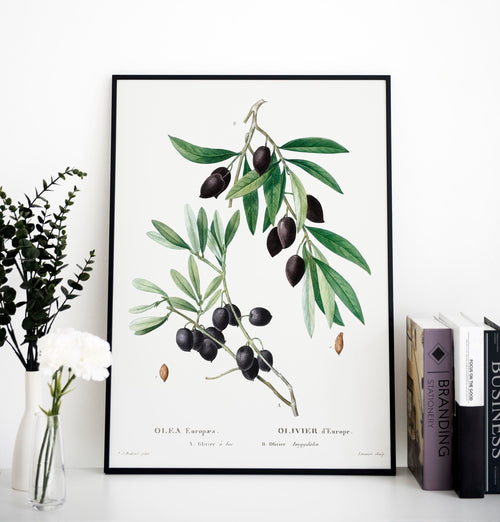Olive Tree Botanical Poster