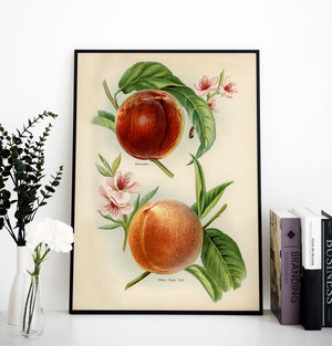 Alexander Early York Peaches Fruit Poster