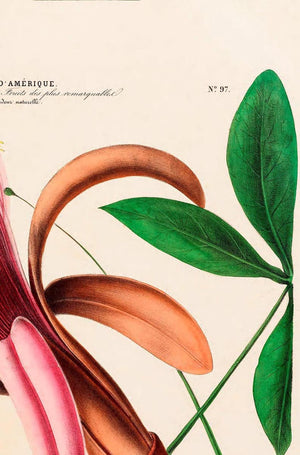 Le Marronier Botanical Poster