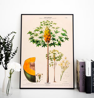 Le Papayer Botanical Poster