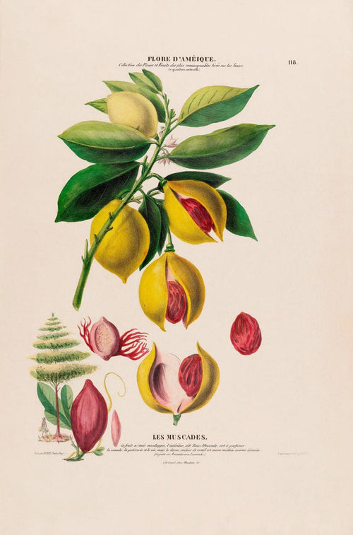 Les Muscades Botanical Poster