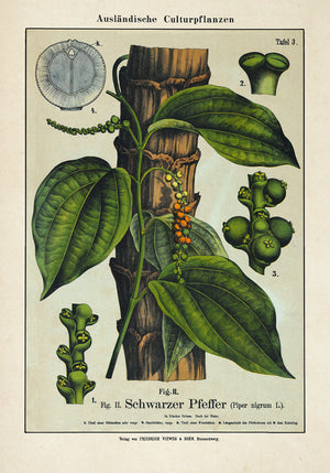Black Pepper Plant Poster
