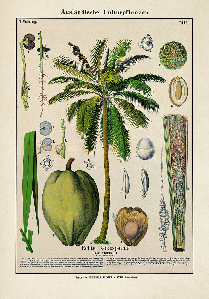 Coconut Palm Tree Plant Poster