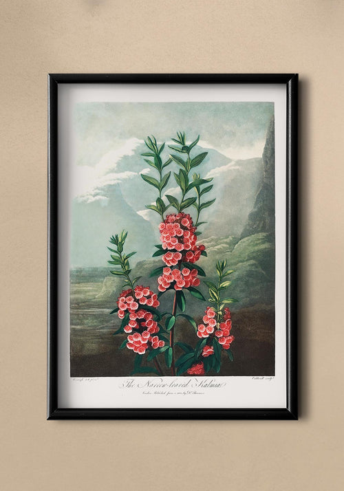 Kalmia Plant from The Temple of Flora