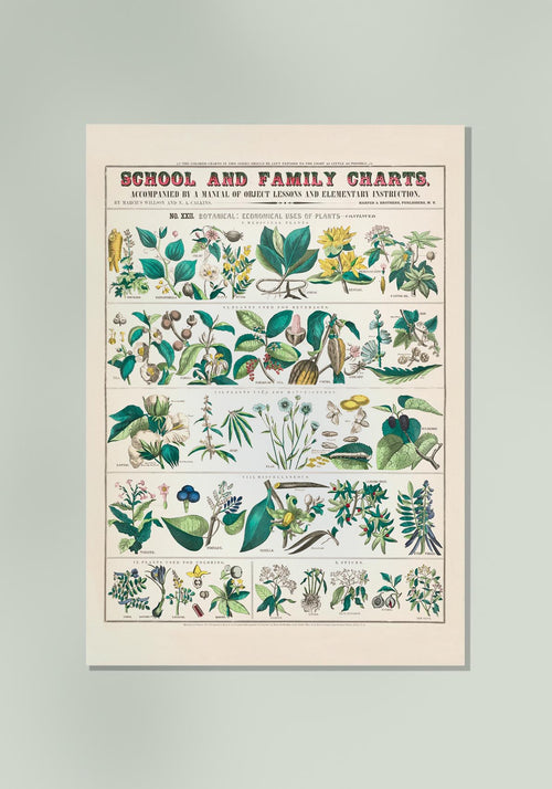 School and Family Chart Plants