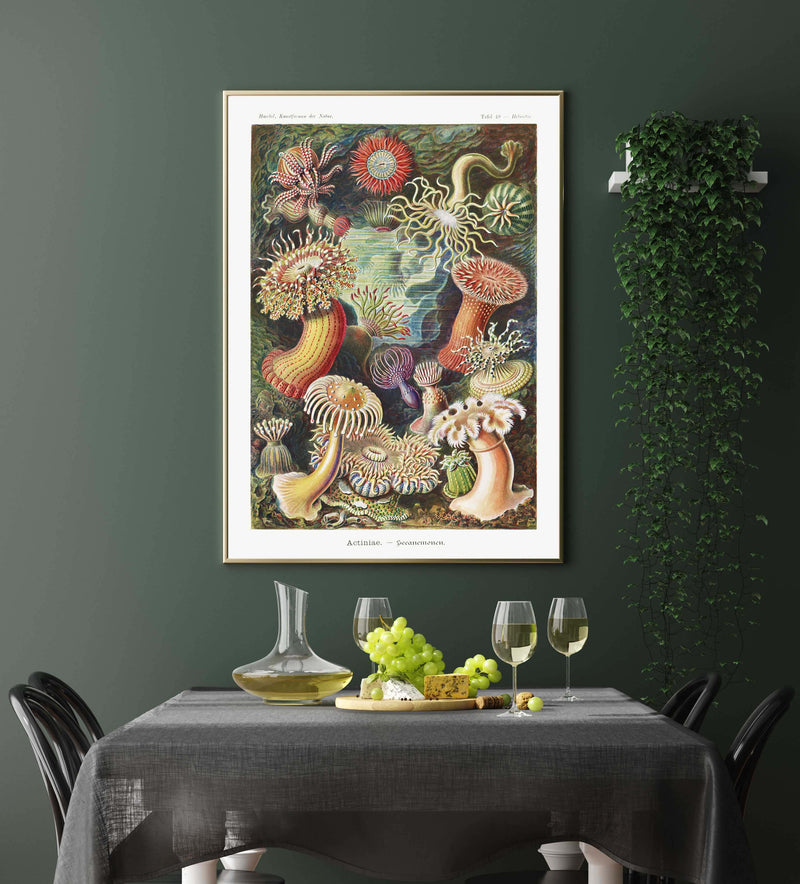 Actinia Anemones by Ernst Haeckel Poster with borders