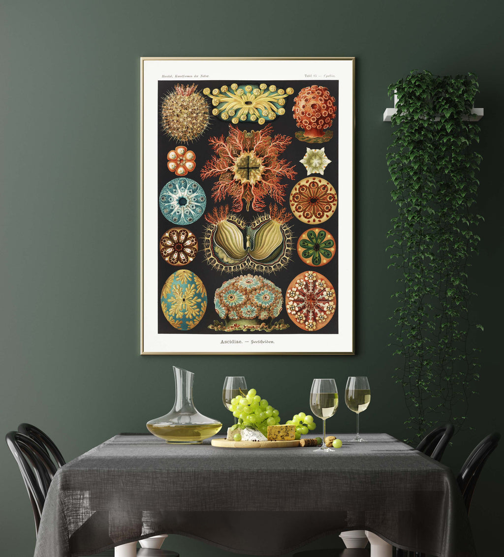 Ascidiae Colourful Corals Embryology by Ernst Haeckel Poster with borders