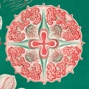 Discomedusae Green Pink by Ernst Haeckel Poster with borders