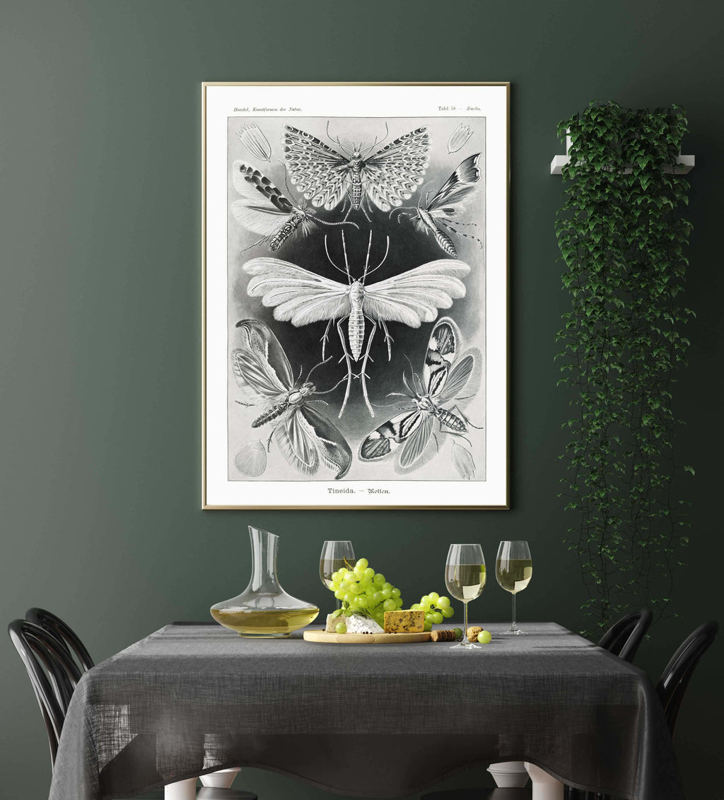 Tineida Moths by Haeckel Poster