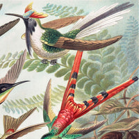 Birds of Paradise by Ernst Haeckel Poster with borders