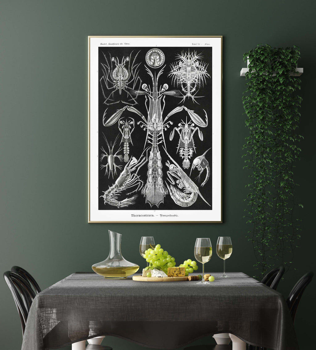 Thoracostraca by Ernst Haeckel Poster