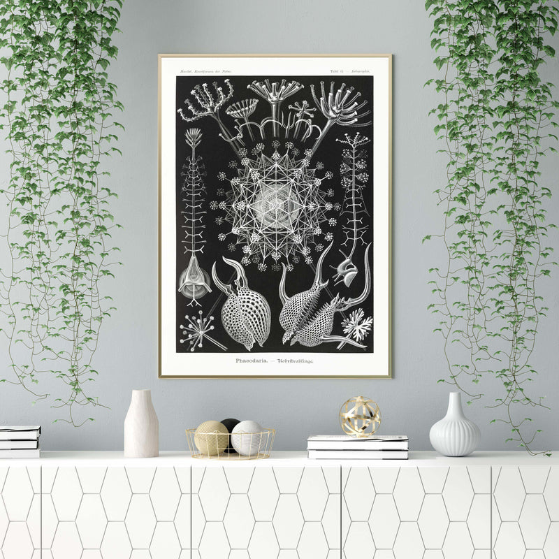 Phaeodaria by Ernst Haeckel Poster