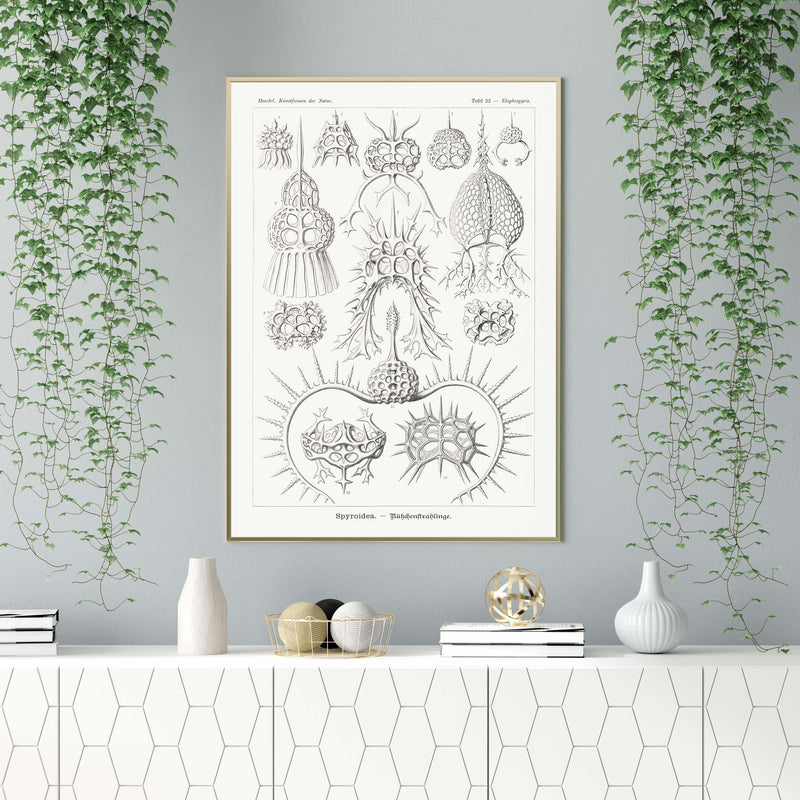 Spyroidea by Ernst Haeckel Poster