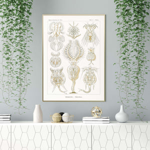 Rotatoria by Ernst Haeckel Poster