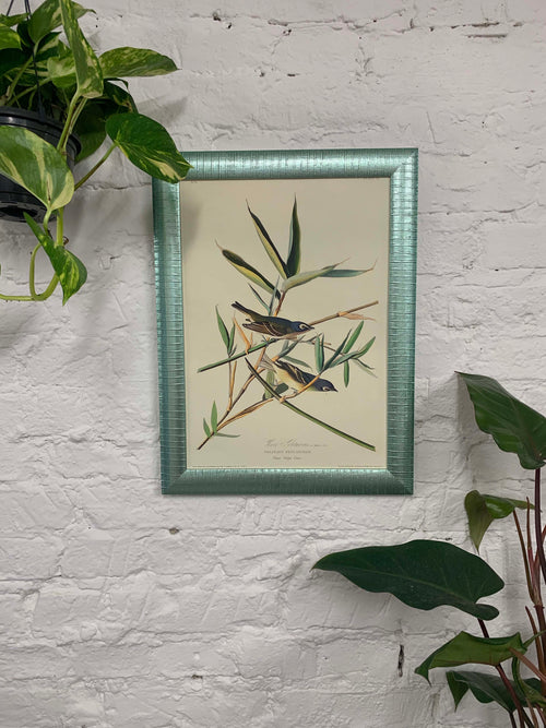 Solitary Flycatcher from Birds of America Canvas Vintage Wood Frame
