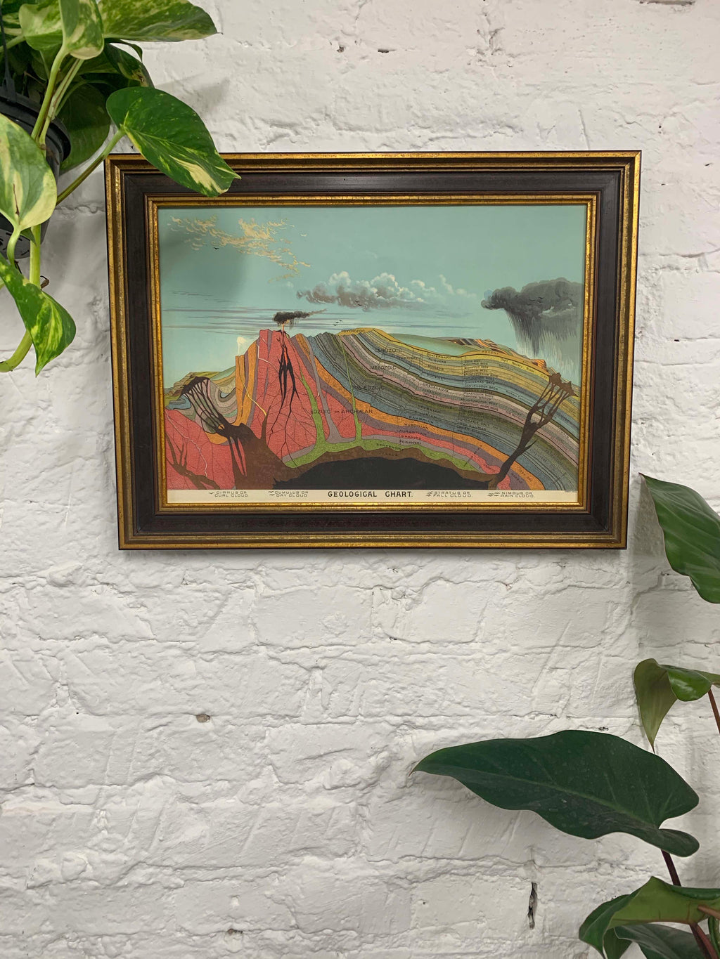Geological Chart Canvas Vintage Wood Frame