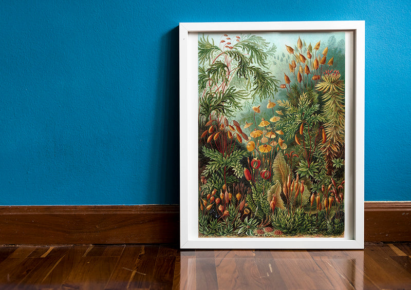 Mushroom Forest Botanical Print by Ernst Haeckel - Kuriosis Vintage Prints