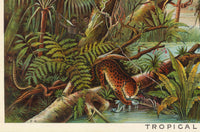 Tropical Zone Educational Vintage Poster - Kuriosis Vintage Prints