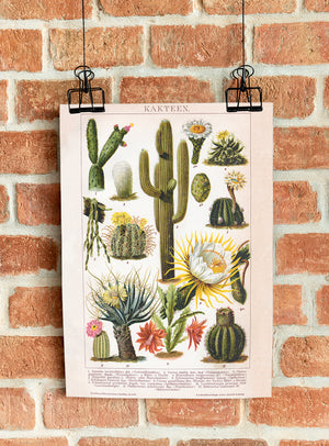 Cactus Collage Brockhaus - Kuriosis Vintage Prints
