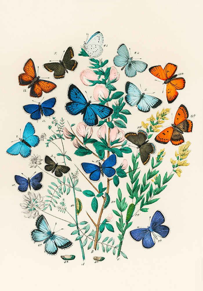 Colorful Butterflies Poster - Perfect for Kids room! - Kuriosis Vintage Prints