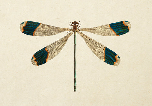 Dragonfly Poster - Perfect for Kids room! - Kuriosis Vintage Prints