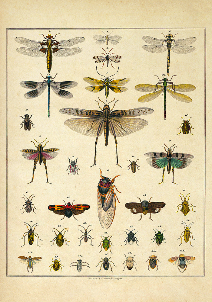 Insects by Oken Poster - Perfect for Living room! - Kuriosis Vintage Prints