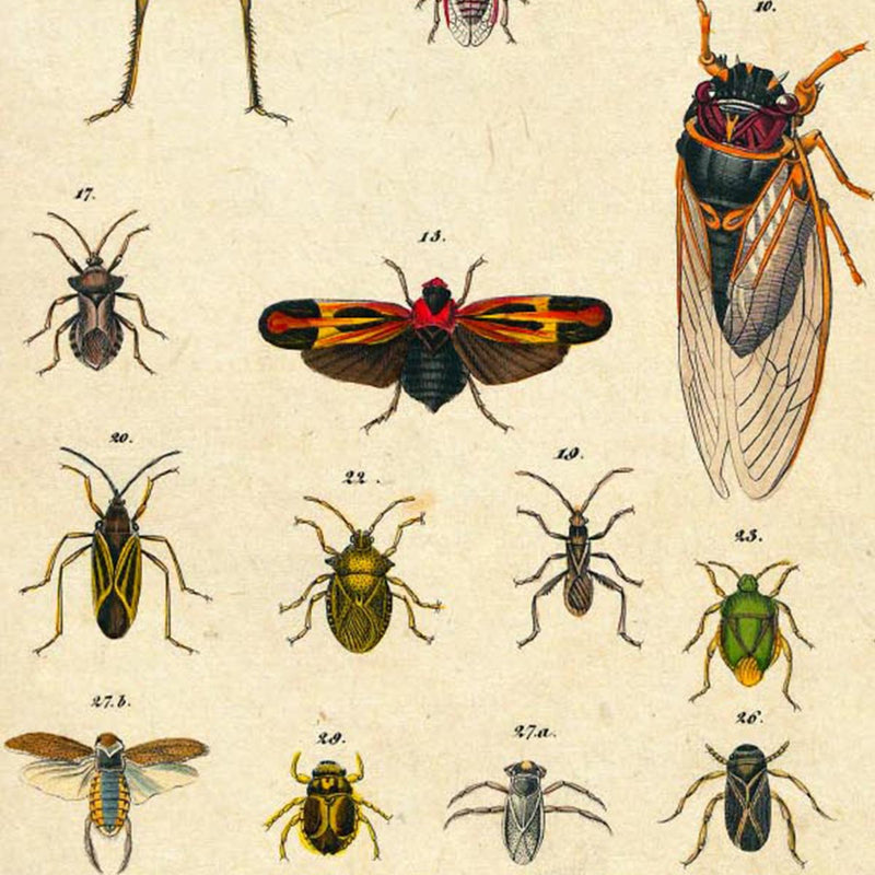 Insects by Oken Poster Vintage Poster