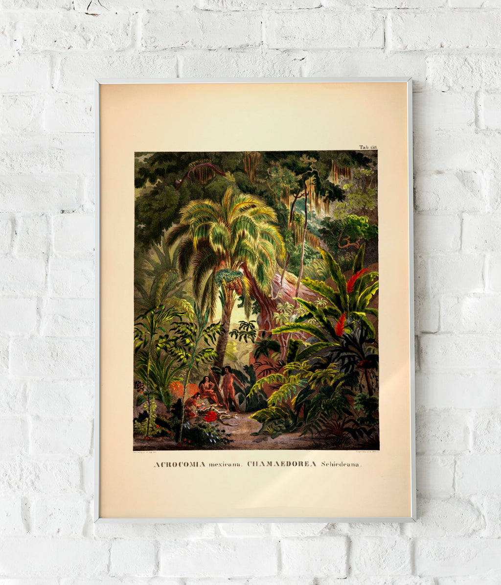 Acromia Mexicana Jungle Scene Vintage Poster