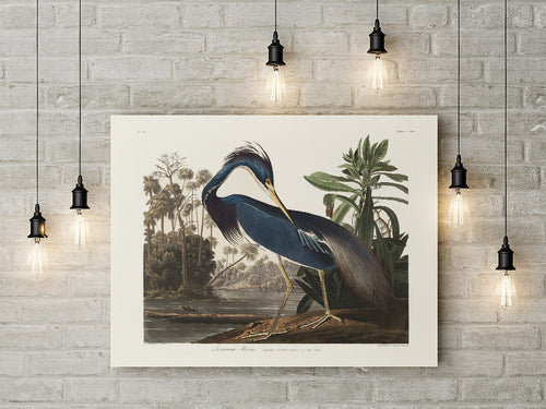 Louisiana Heron Vintage Bird Poster