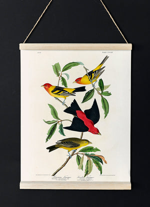 Louisiana Tanager and Scarlet Tanager of Birds of America
