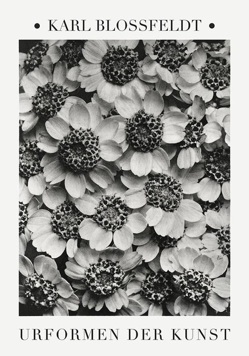 Achillea Clypeolata Leaf from Urformen der Kunst (1928) by Karl Blossfeldt. Fine Art Photo Reproduction from the original photogravure.