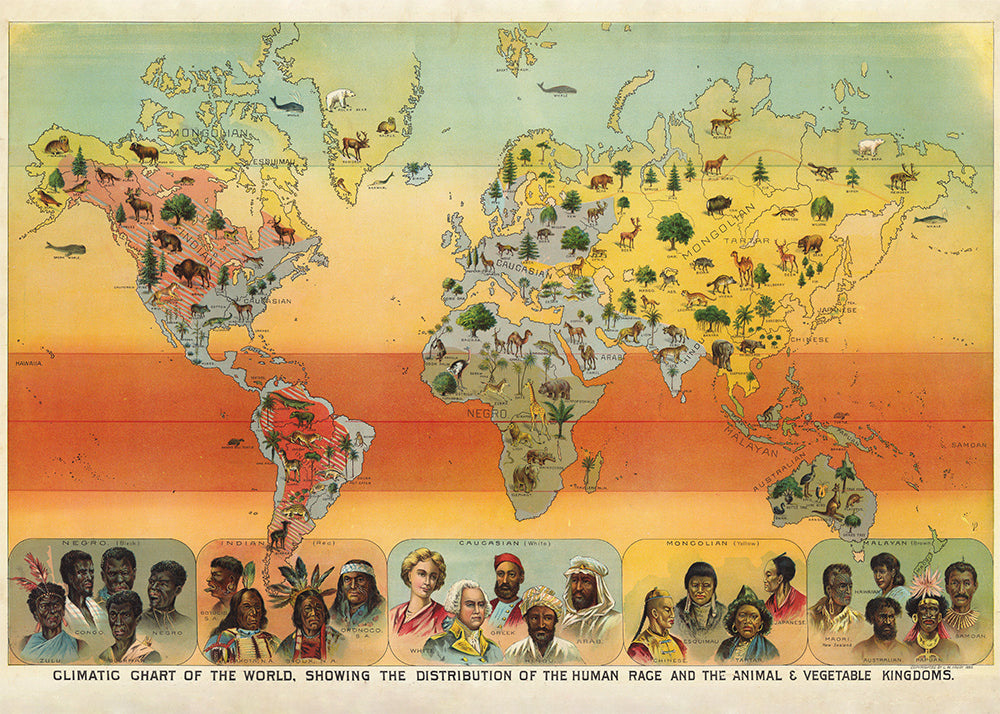 Climatic Chart of the World Poster - Perfect for Living Room and Office - Kuriosis Vintage Prints
