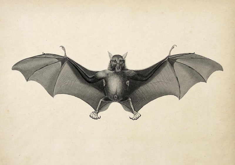 Antique Big Bat Poster from KURIOSIS.COM