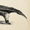 Antique Giant Anteater Poster