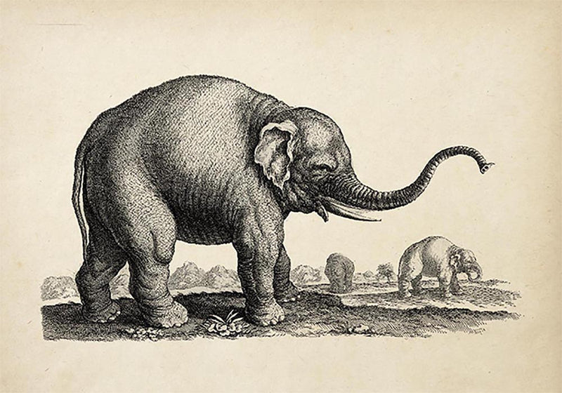 Antique Elephant Poster
