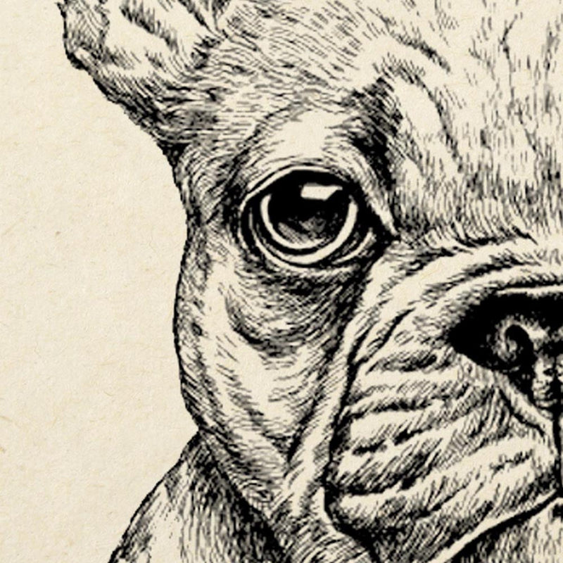 Antique French Bulldog Poster