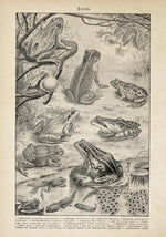 Antique Frogs Poster